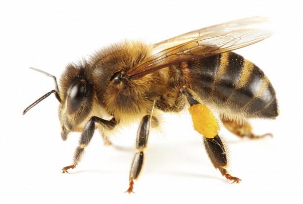 HoneyBee Expo: Sunday, 10/6