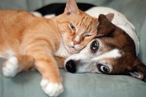 Adopt a Rescue Pet!