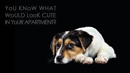 Adopt A Pet [This Thursday]